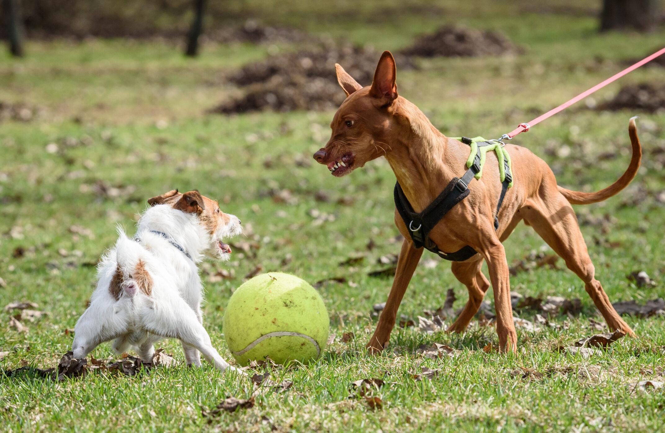 Best Way To Correct Dog Behavior